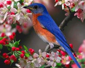 https://kbchaingoai.files.wordpress.com/2011/11/cute_bird_in_beautiful_flowers.jpg?w=300